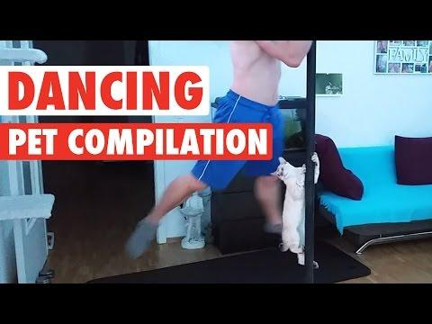 Dancing Pets || Funny Compilation