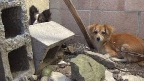 Three Dogs Were Dumped On The Street By Their Owner...