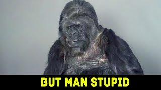 YOU WON'T BELIEVE WHAT THIS GORILLA SAYS!