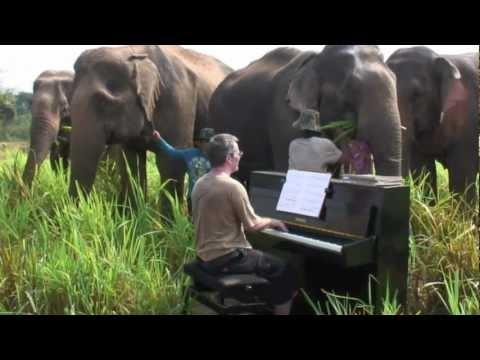 Beethoven For Elephants - Thailand