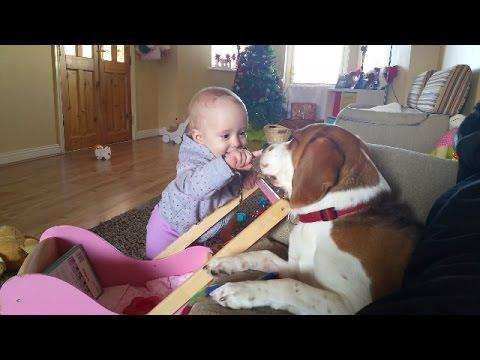 The Most Gentle And Patient Dog And Annoying Baby