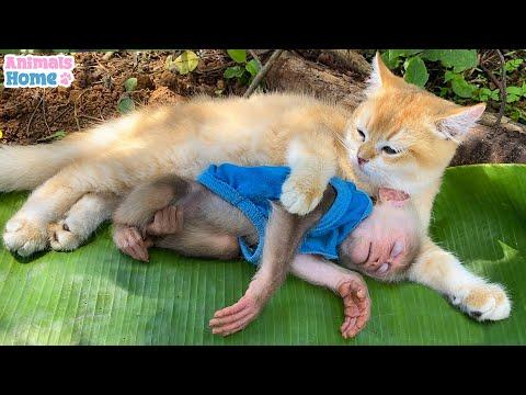 BiBi monkey loves to play with the cat's tail #Video