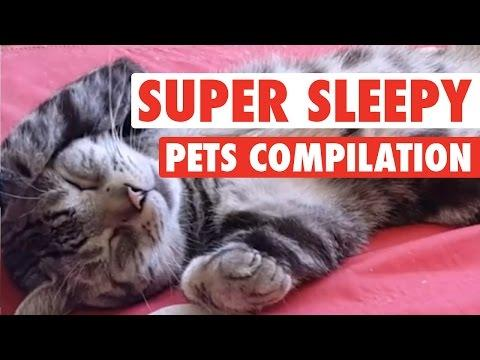 Super Sleepy Pets || Pets Sleeping Compilation