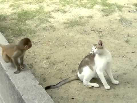 Cat And Monkey - Best Buddies!