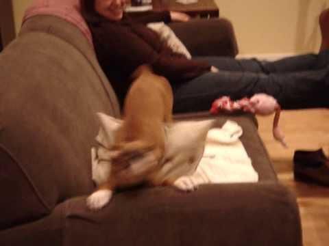 Dog So Happy To See Her Human She Can't Stop Shaking With Delight