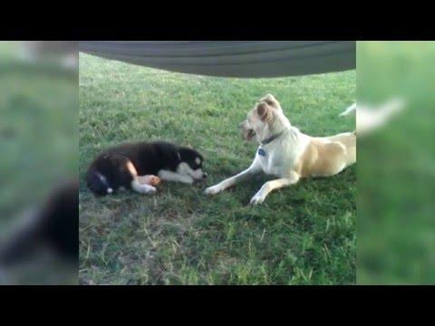 Dog Tells Puppy To Shh