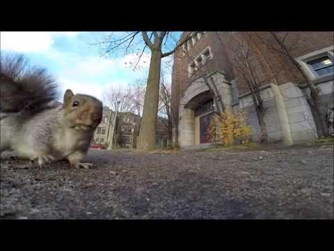 Squirrel Grabs Guy's GoPro Camera And Carries It Up A Tree