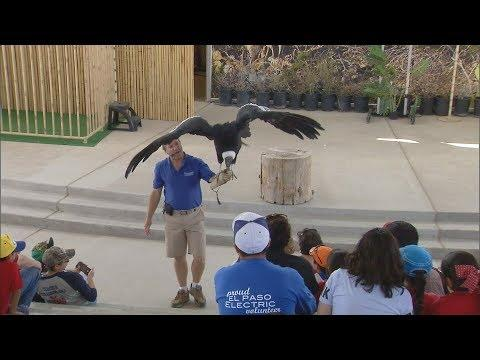 Meet Birdman Joe Krathwohl  (Texas Country Reporter)