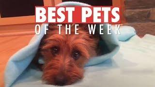 Best Pets of the Week | June 2018 Week 2