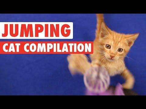 Cats Jumping || Funny Compilation