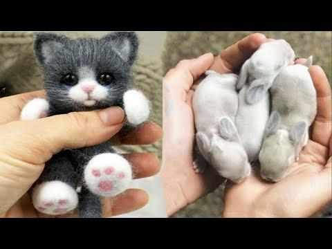 Cute baby animals Videos Compilation cute moment of the animals - Cutest Animals #25 #Video