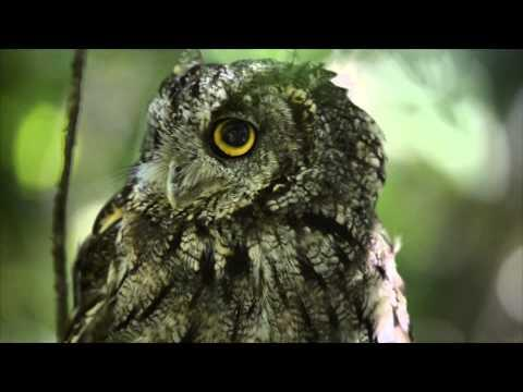 It's Owl Awareness Day - Whooo Wants To Party...
