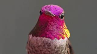 The Hummingbird Whisperer