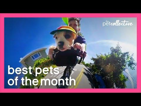 Best Pets of the Month Video (June 2020)