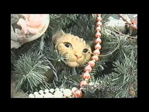 Cat Refuses To Leave Christmas Tree