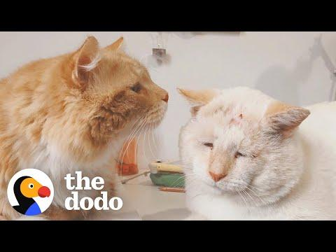 Stray Cats Become Inseparable Once Adopted #Video