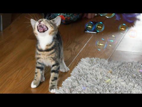 Funny Cats and Kittens Playing With Bubbles - Funny Cat Videos