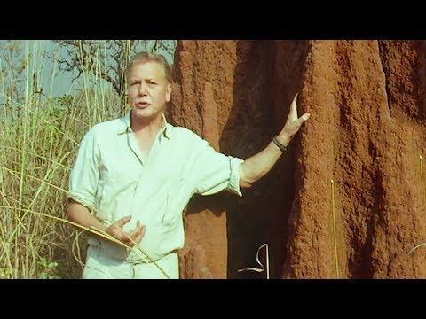Termite Architecture | Trials Of Life | BBC Earth