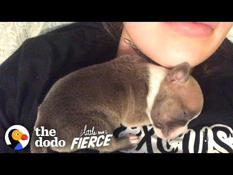 1-Day-Old Puppy Grows Up To Have The CRAZIEST Ears | The Dodo Little But Fierce