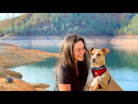 Stray dog melts hikers heart video- The dog that picked his human!