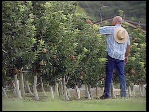 Medina Apple Farm (Texas Country Reporter)