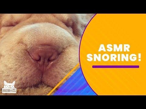 ASMR: Snores
