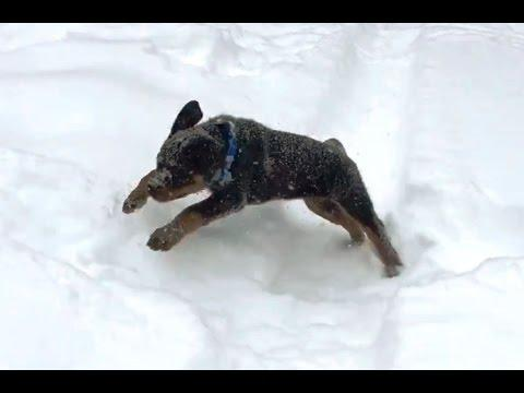 Puppies Playing In Snow Compilation