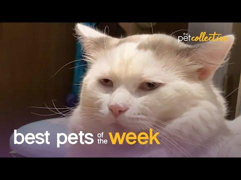 Super Cool Cat Video | Best Pets of the Week