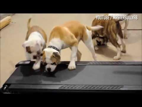 Dogs On Treadmill Compilation