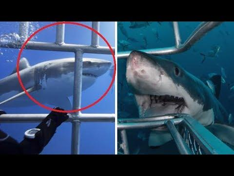 Most Dangerous Animals That Could END You
