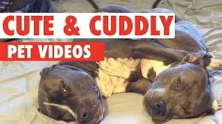Pet Who Just Want Cuddles | Cute and Cuddly
