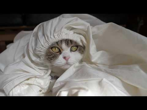 The fitted sheet and Maru
