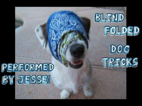 Blindfolded Dog Tricks by Jesse