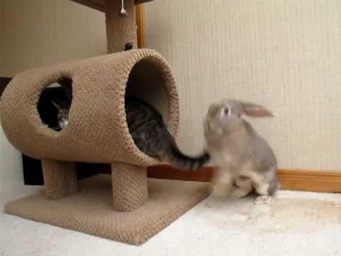 Bunny attacks cat video
