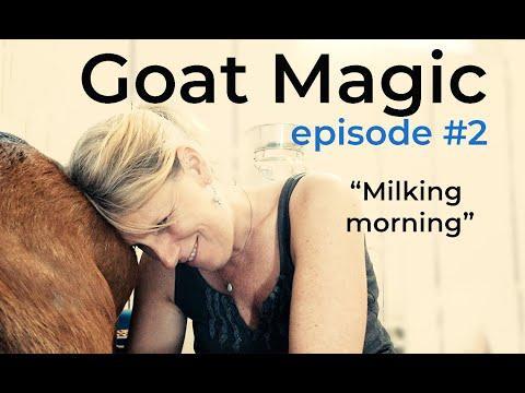 Goat Magic Video: Episode #2 Morning Milking