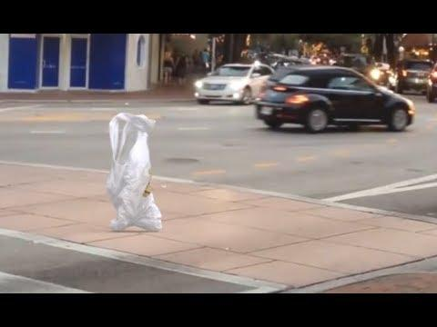Shopping Bag Going For A Walk - Your Daily Dose Of Internet