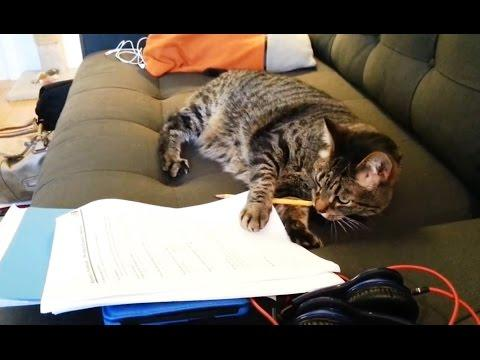 Cats Helping Their Humans With Homework