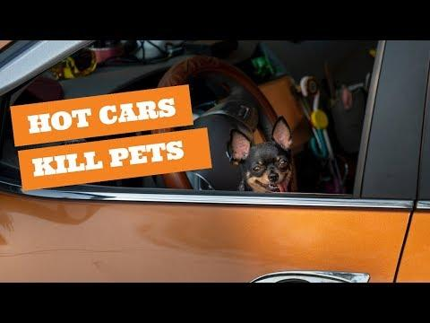 Don't leave your pets in a car in the summer!