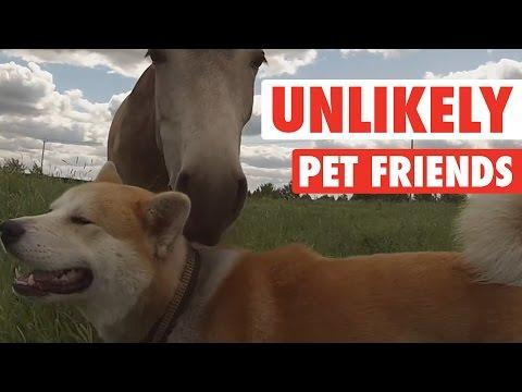 Unlikely Pet Friends Compilation