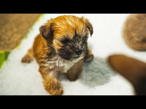 Puppy Adopted By Cat Mother Video | Pets Wild At Heart | BBC Earth