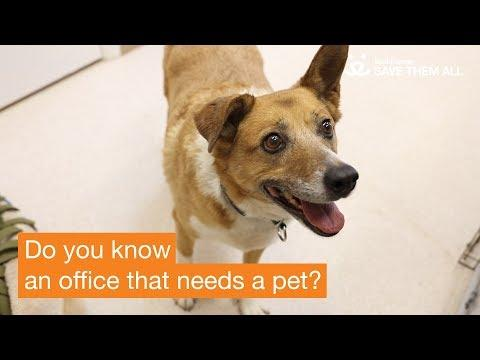 Office Pets - Best Friends Animal Society