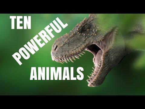 Ten Powerful Animals Video - Air Land Sea