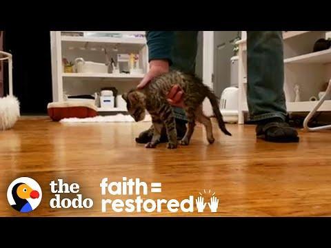 Teeny Tiny Paralyzed Kitten Surprises Everyone | The Dodo Faith = Restored