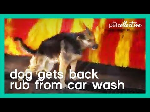 Dog Gets Back Rub from Car Wash | The Pet Collective