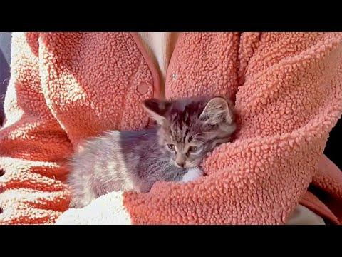 Adopting a Baby Cat Is the Best Feeling Ever #Video