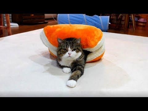 The macaron bed and Maru