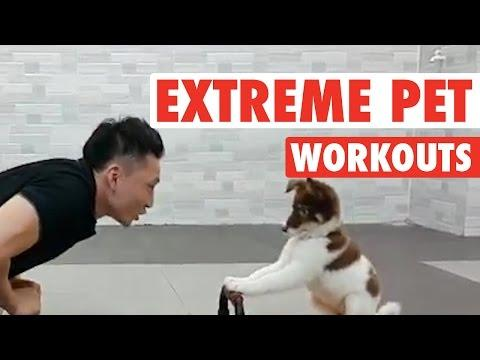 Extreme Pet Workouts || Animals Working Out