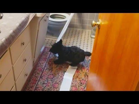 Dogs Playing With Toilet Paper Compilation