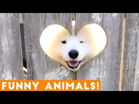 Funniest Pets & Animals of the Week Compilation October 2018