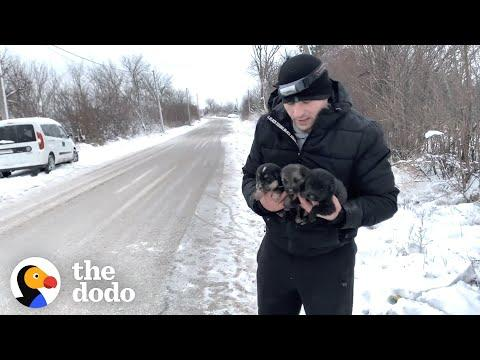Brave Mama Dog Asks Strangers To Save Her Babies Video